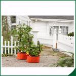 Buy cheap 感じられた耐候性がある植物は家/庭のための袋を育てます12X24が袋のフェルト材料を育てる植物のための袋を育てます product