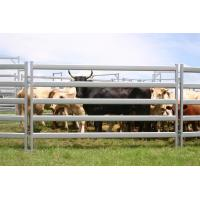 Buy cheap Used Corral Panels,Used Horse Fence Panels,Galvanized Livestock Metal Fence Panels product