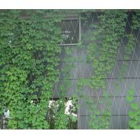 Buy cheap Trellis Climbing 304L Stainless Steel Rope Mesh Wtih Ferrule product