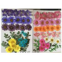 Buy cheap Raw Material Colorful DIY Pressed Flowers Plant Specimens For Kindergarten product