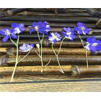 Candle Decoration Dried Flower Art , Larkspur With Stem DIY Pressed Flowers for sale