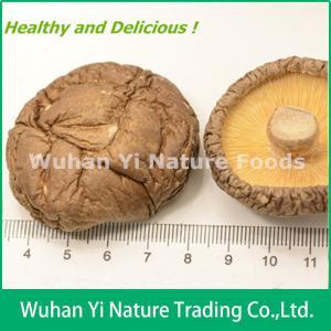 China China Dried Shiitake Mushroom on sale