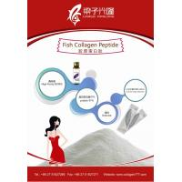 Fish collagen peptide powder for nutrition supplement for Fish collagen powder