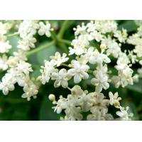 Buy cheap Elder flowers powder, Elder flowers Extract, 100% natural skin care ingredients, manufacturer, Shaanxi Yongyuan Bio-Tech product