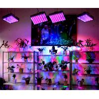 Buy cheap medical plants Accelorator LED Grow bulb product