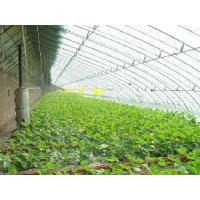Buy cheap Polycarbonate Roofing Sheets product