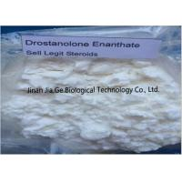 Bodybuilding Raw Steroid Powders