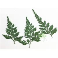 Buy cheap Green Fern DIY Pressed Flowers 2 Different Size Fit Child Hairpin Decorations product