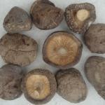 Высушенный гриб шиитаке