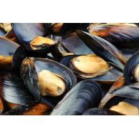Buy cheap Frozen HACCP Certification Cooked Mussels Tasty Seafood From China product