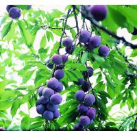 Buy cheap Dietary Supplement Ingredient 25% Blueberry Extract Anthocyanidins 100% Natural from wholesalers
