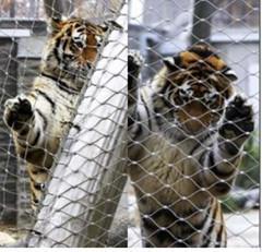 A malha protetora da cerca do jardim zoológico, rede de arame de aço inoxidável tecida mão, cerco do jardim zoológico