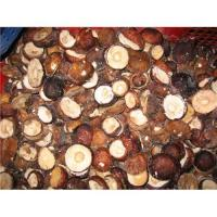 Buy cheap Supply hot sale boletus fungus product
