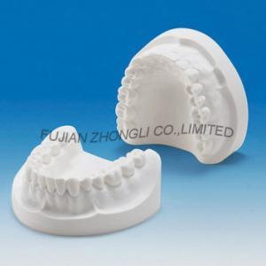 Modelo da maxila do emplastro