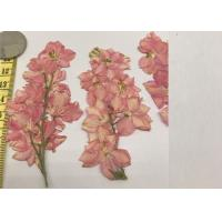 China DIY Art Painting Real Dried Flowers , Pink Larkspur With Stem Large Pressed Flowers for sale