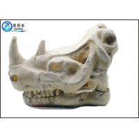 Solid fish tank decorations exotic environments t rex for Fish tank skull decoration