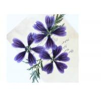 Dark Purple Dried Hollyhock Flowers , Pressed Flower Artwork For Aroma Wax Tablets for sale