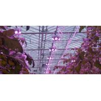 Buy cheap 185W led green grow light Spectrum led plant lights A+ 3years warranty Meanwell driver aluminum /Sliver product