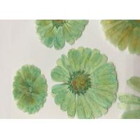 Mint Green Dyed Dried Pressed Flowers Handmade For Press Art Painting Material for sale