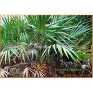 Buy cheap Ácidos grasos del extracto de la palma enana americana 25%-45% product