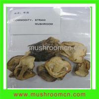Quality Straw Mushroom for sale