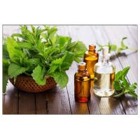 China Corn Mint Oil for headaches,peppermint oil spider repellent,Peppermint leaf oil for digestive disorders on sale