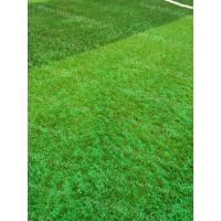 China Soccer Synthetic Grass Infill TPV Eco Rubber Granulate Heat Resistance wholesale