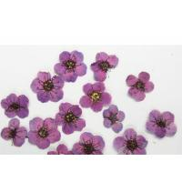 Purple Colour Narcissus Dried Flower Nail Art For DIY Nail Accessories for sale