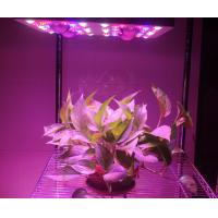 Buy cheap 620 Watt(UV/IR) LED Grow Lamp Lights 3000k Blue And Red 5W Diode , 120V Power Cord from wholesalers