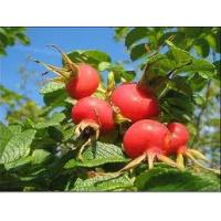 Buy cheap Dry pressed rosehip oil,Rose hip oil product