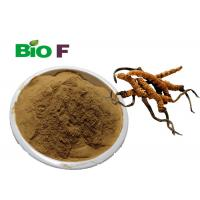 Buy cheap CS-4 Cordyceps Powder Herbal Extract Cordyceps Sinensis Extract product