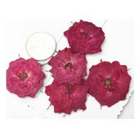 True Rose Pressed Diy Dried Flowers For Pendant Necklace Jewelry Ornaments Material for sale