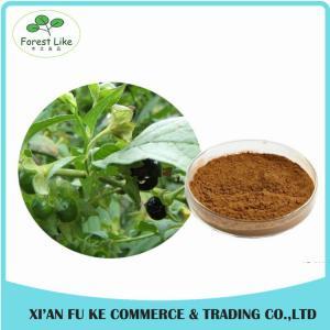 Atropa Belladonna Extract Powder Hyoscyamine 0.7% -1.5%