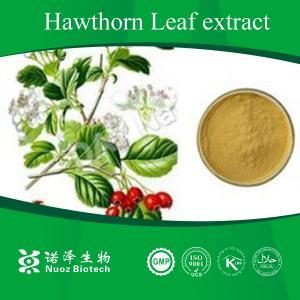 China Digestive food additives Hawthorn P.E. on sale