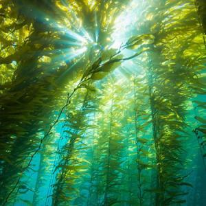 Buy cheap Adubo Foliar orgânico do extrato NPK da alga na taxa de desconto/Alginate≥22-25%; product