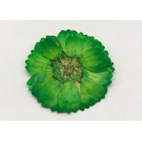 Buy cheap Dye Green Dried Flowers , Dried Daisy Flowers For Epoxy Recycled Flowers product