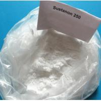 Injectable Muscle Building Steroids Testosterone Sustanon 250 White Powder For Muscle Mass