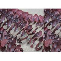 Decorative Pressed Plant Art , Dried Eucalyptus Leaves For Anniversary Party