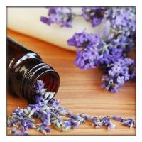 Buy cheap Lavender Oil for Toenail Fungus,lavender Essential Oils for Diffuser, lavender oil for soap making product