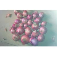 Buy cheap Organic Pure Natural Red Asian Shallot Contains Folate , Zinc product