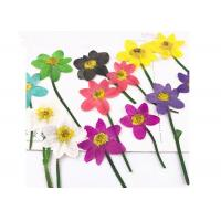 Unique Dried Flower Art Multi Color Teaching Specimens Plants For 3D Art Painting for sale
