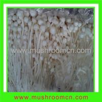 Buy cheap Flammulina Velutipes product