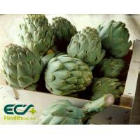 China Herbal Health Supplements Cynara Scolymus Extract Prevention Of Cardiovascular Diseases on sale