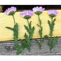 Purple Dried Chrysanthemum Flower Color Optional For Candle Decoration for sale