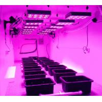 forest grower led grow lights