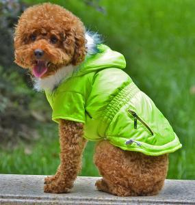 Buy cheap Diversa ropa del perro del verde del diseño product