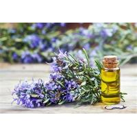 Buy cheap Rosemary oil for fragrant bodily perfumes,Organic Rosemary Essential Oil product