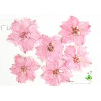 Eternal Floral Dried Pressed Flowers Larkspur Diameter 3CM For Christmas for sale