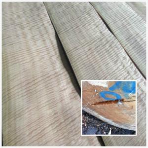 Figura chapa de madera del eucalipto