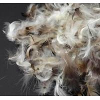 Buy cheap Soft Pillow Filling Materials Washed Grey Duck Feathers for Filling Bedding and Clothes product